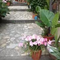 Hotel Apartamentos Anateresa en aldea-en-cabo