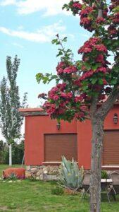Un buen hotel en Papatrigo, Ávila